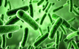 Дисбактериоз - причины, симптомы, лечение дисбактериоза.